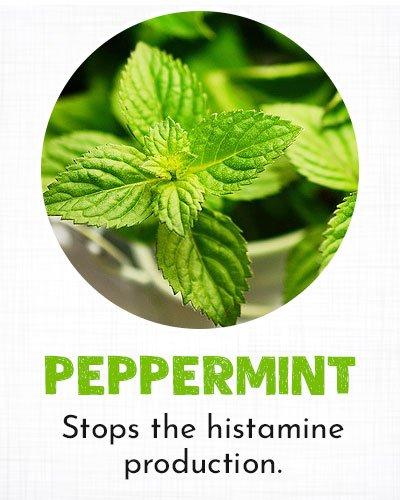 Peppermint for Allergy