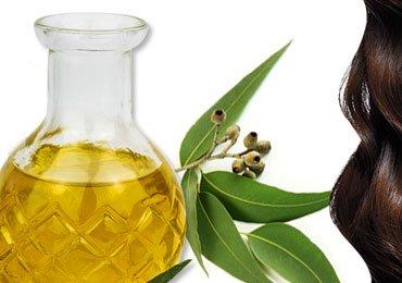 Amazing Benefits Of Eucalyptus Oil For Hair!