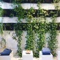 LivingWall-at-ReformationNY