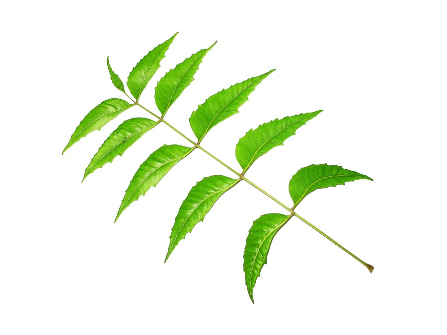 Beauty, Skin care, Healthy Skin, Acne Free Skin, Skin Health, Health, Neem Leaves