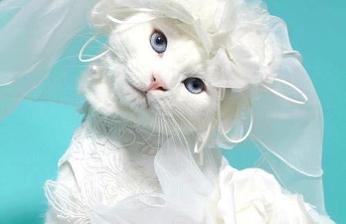 Cat Hat Dress