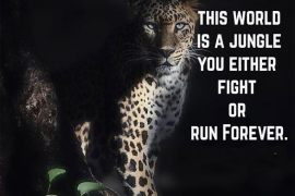 This World is a Jungle - Best Fight Quotes