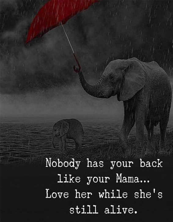 Nobody has your Back like your Mom - Best Animal Quotes