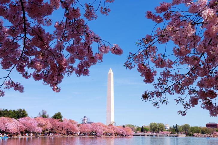 739678main_CherryBlossoms