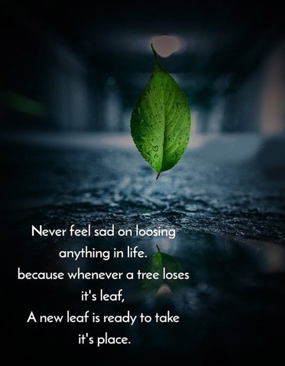 A New Leaf is Ready to Take Place - Best Life Quotes
