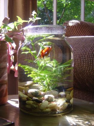 How To Do Decoration Of Fish Aquarium In Your Home