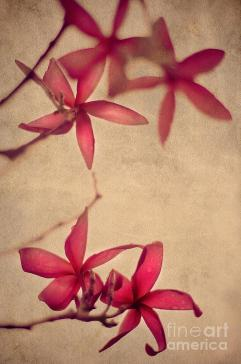 red-frangipani-flowers-touch-of-japanese-style-jenny-rainbow