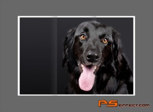 Use Digital Camera For A Modern Pet Picture