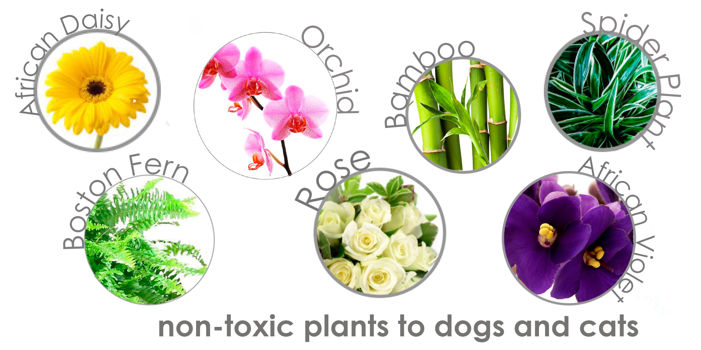 September 2015 stylish paws for Non toxic ferns