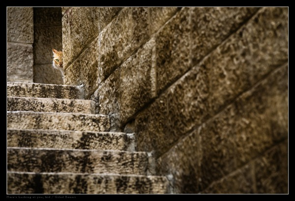 Here__s_Lurking_at_you__kid_by_gilad