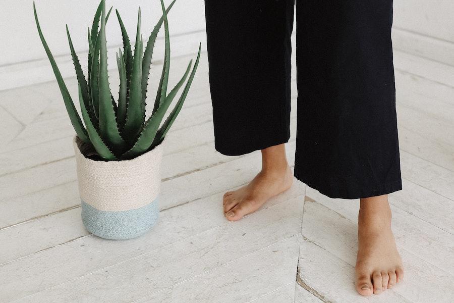 aloe-vera-barefoot-beautiful-1589904