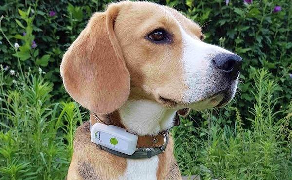 Weenect dogs 2 avis test traceur GPS chien