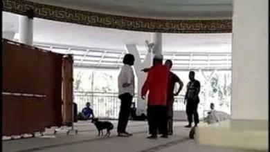 Photo of Balada Anjing dan Si Penista