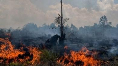 Photo of Sengkarut Penanganan Asap di Riau