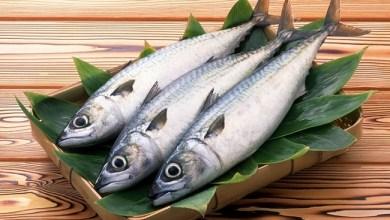 Photo of Konsumsi Ikan untuk Kecerdasan Anak