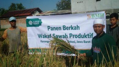 Photo of Baitul Wakaf Panen Padi Perdana di Bekasi