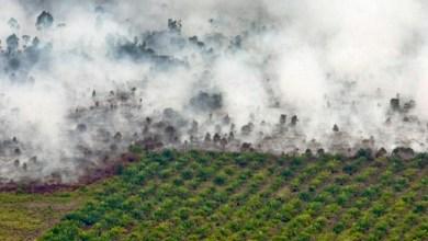 Photo of Pembakaran Hutan Sengaja Buah Sistem Serakah