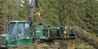 Industri Besar Pulp dan Paper Hindari Penyelidikan Independen Perusakan Hutan
