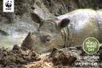 """Peringati Hari Badak Sedunia, WWF-Indonesia menggelar aksi """"Rhino Long March"""""""