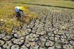 Paket WTO Bali Menghambat Kedaulatan Pangan Nasional