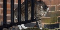 Lebih dari 11 Ribu Pecinta Kucing Protes Tayangan TV ini