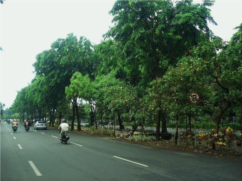 suara jakarta penghijauan pohon pinggir jalan