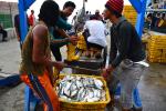 Di 2015, KKP Sebatas Pencegahan, Belum Tingkatkan Kesejahteraan Nelayan
