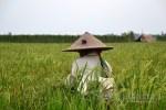 Penguatan Sektor Pangan Negeri Agraris