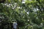 Tak Hanya Berhenti Tebang Hutan, APP Harus Lakukan Konservasi
