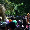 Pengunjung terlihat berjubel di depan kandang gajah di Taman Marga Satwa Ragunan, Jakarta. (Foto: Fajrul Islam/SuaraJakarta)