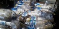 Menteri LHK dan DPR Didesak Tindaklanjuti Kasus Penyelundupan Kakaktua dalam Botol