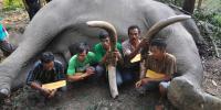 WWF Indonesia Desak Perberat Hukuman Bagi Pemburu Gading Gajah