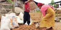 Warga Di Desa Ini Bayar Listrik Cukup Dengan Sekilo Kopi