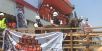 ACT: 403 Ekor Sapi Kurban Kerjasama DKI Berasal dari Warga, Bukan APBD
