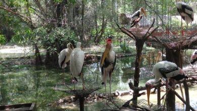 Photo of Covid-19: Hidupan liar di taman-taman zoologi  turut terjejas