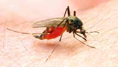 Photo of Hati-hati dengan Malaria yang muncul di Ampang