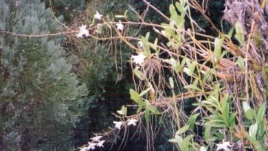 Photo of Keriangan mencari orkid liar dalam hutan bertukar cemas