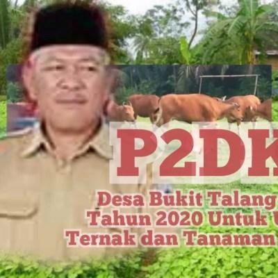 P2DK Bukit Talang Mas Untuk Ternak dan Tanaman Pangan