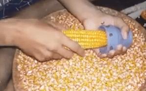 teknologi tepat guna sederhana di bidang pertanian