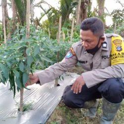 PINJAM LAHAN TIDUR Kemudian Aiptu Nanang Berkebun dan Memelihara 8.000 Ikan