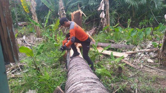 Rumah terbelah dua akibat ditimpa batang pohon rumbia