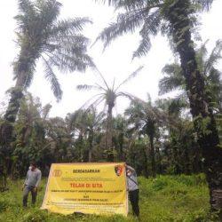 POLDA KALSEL Sita Aset PT Ladangrumpun Suburabadi di Tanbu, Dugaan Penggunaan Kawasan Hutan tak Berizin