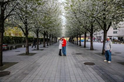 Cerejeiras Brancas na Praça da London Eye Em O Que Fazer em Londres