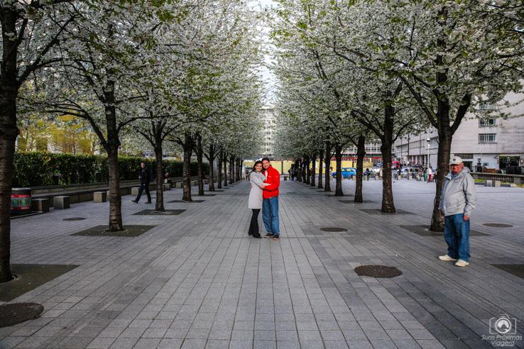 Cerejeiras Brancas na Praça Jubilee Gardens nas melhores dicas de londres