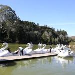 Os Pedalinhos do Lago Negro na Serra Gaúcha