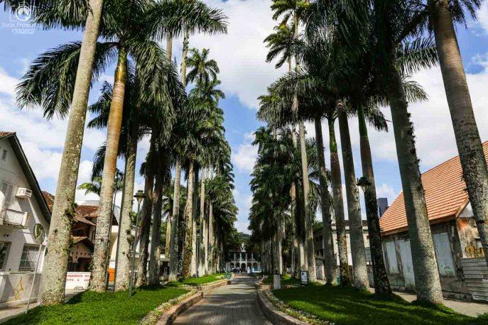 Rua das Palmeiras em Joinville