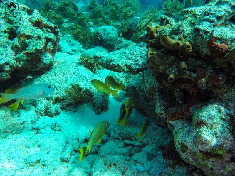 Mergulho em Key Largo a caminho de Key West