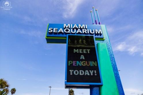 Miami Seaquarium em Dicas Miami