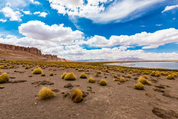 Salar de Tara nos passeios Deserto Atacama