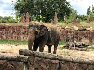 Exposição dos Elefantes no Busch Gardens